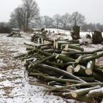 Ein Holzstapel Buchenholz Brennholz